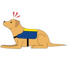 Introduction to Assistance Dogs - mini course
